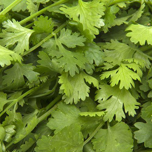 Fresho Coriander Leaves, 100 g