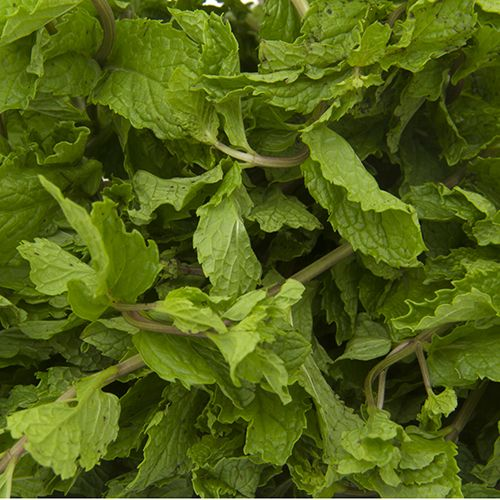 Fresho Mint Leaves - Cleaned, without roots, 100 g