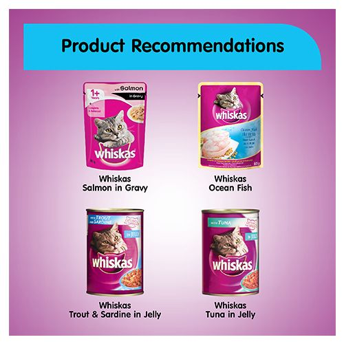 Whiskas Sample Pack - Whiskas Wet Meal Adult Cat Food, Tuna in Jelly, 85 gm
