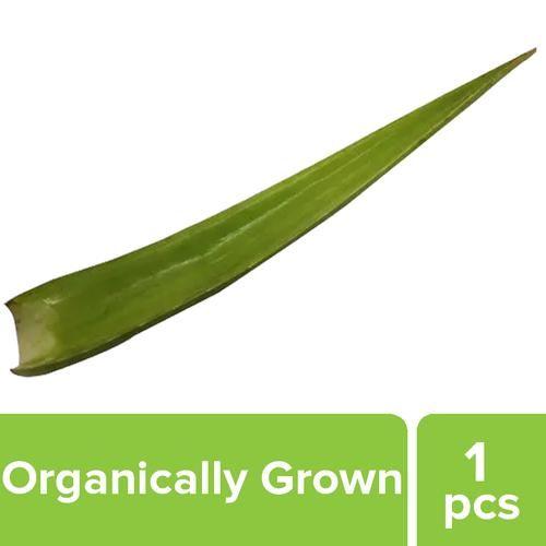 Fresho Aloe Vera - Organically grown, 1 pc