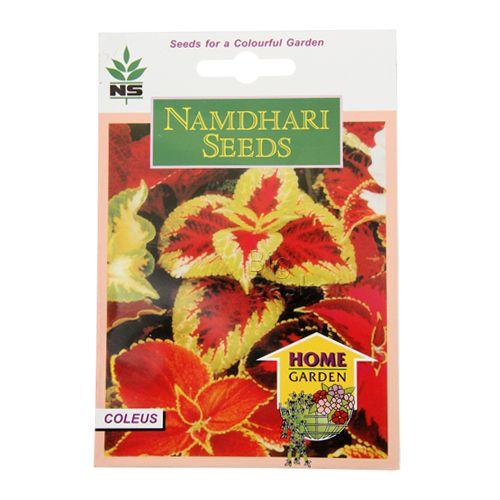 Namdhari Seeds Home Garden - Coleus, 500 pcs