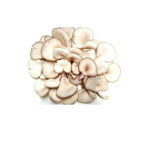 Fresho Mushrooms - Oyster, 200 g
