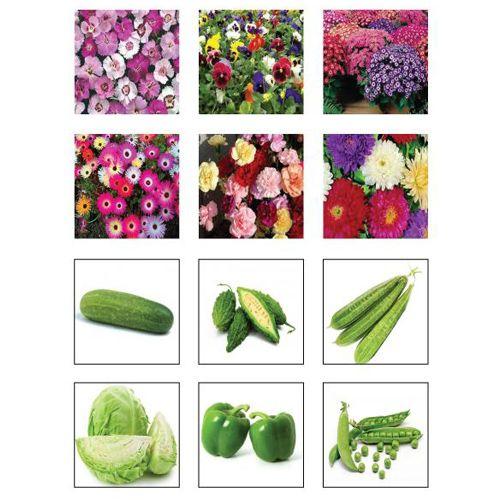 Trust Basket Seeds Kit - Winter Vegetable & Flower, 1 pc Pack of 12
