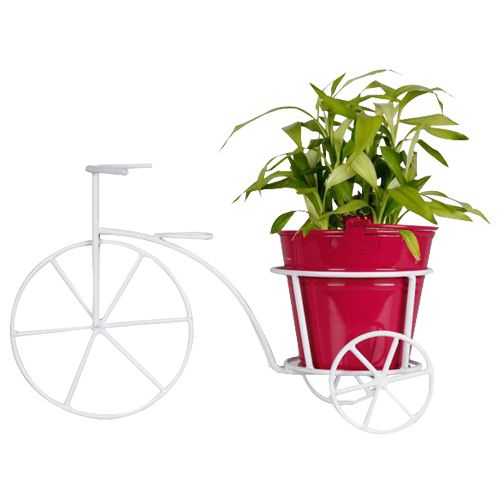 Trust Basket Bicycle - With Magenta Bucket Planter & Lucky Bamboo Plant, 1 pc