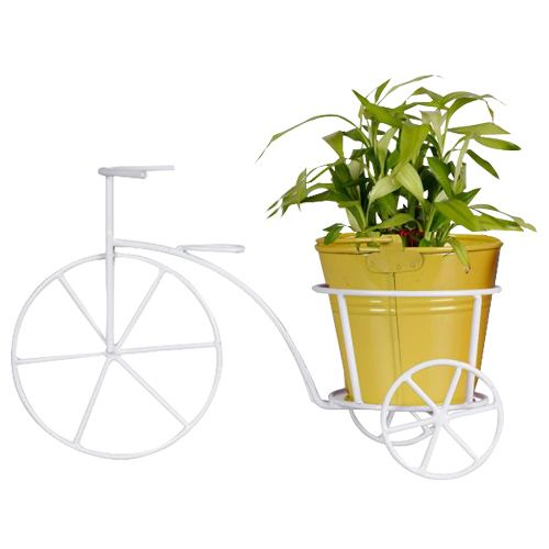 Trust Basket Bicycle - With Yellow Bucket Planter & Lucky Bamboo Plant, 1 pc