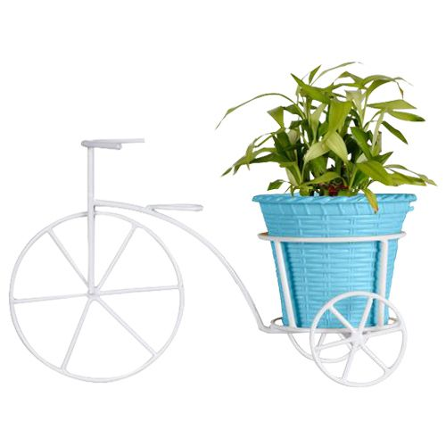 Trust Basket Bicycle - With Blue Plastic Planter & Lucky Bamboo Plant, 1 pc