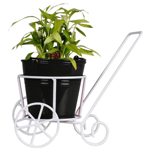 Trust Basket Trolly - With Black Bucket Planter & Lucky Bamboo Plant, 1 pc