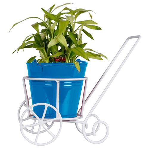 Trust Basket Trolly - With Blue Bucket Planter & Lucky Bamboo Plant, 1 pc