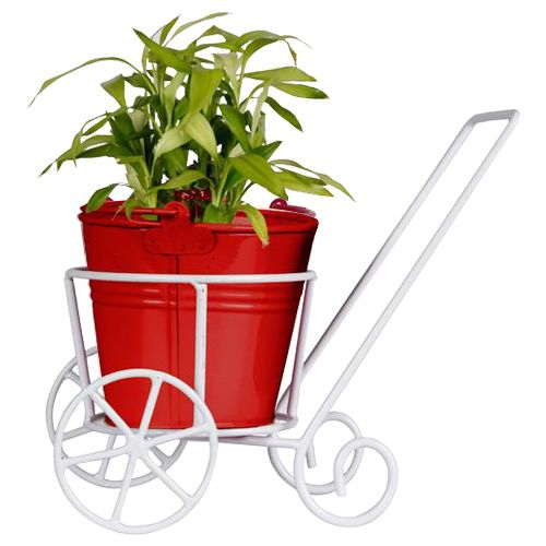 Trust Basket Trolly - With Red Bucket Planter & Lucky Bamboo Plant, 1 pc
