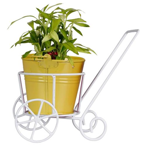 Trust Basket Trolly - With Yellow Bucket Planter & Lucky Bamboo Plant, 1 pc
