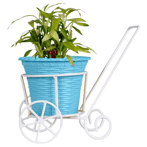 Trust Basket Trolly - With Blue Plastic Planter & Lucky Bamboo Plant, 1 pc