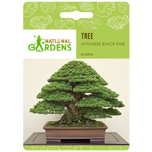 Buy National Gardens Japanese Black Pine Bonsai Seeds ...