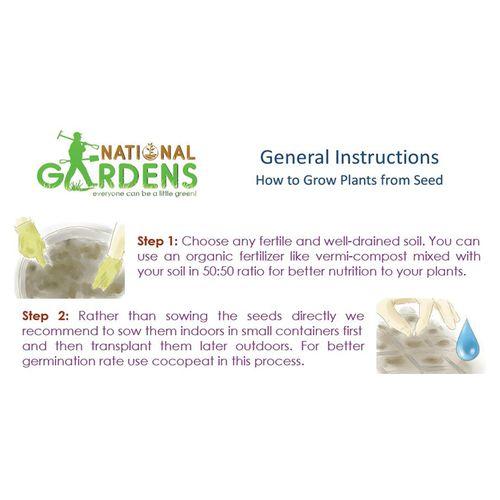National Gardens Long Purple Brinjal Seeds, 100 Seeds