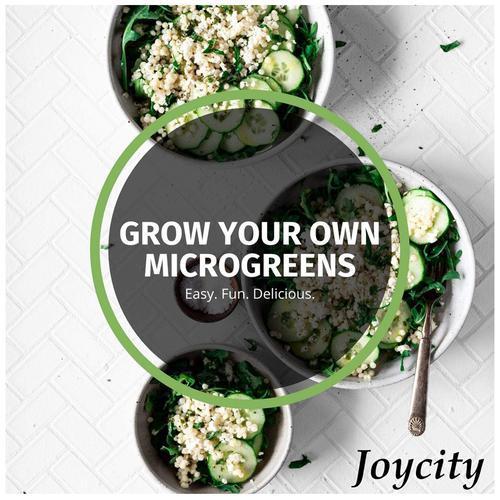 Joycity Sweet Corn Microgreens, 50+ Seeds