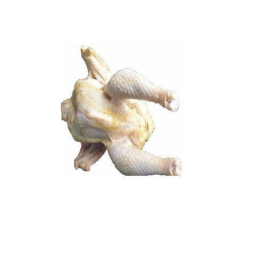 Sadic Proteins Chicken - Country Chicken(Nattu Kozhi), 1.3 kg Medium Cut Cleaned