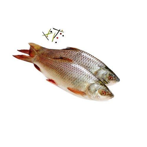 Fish & Chicken  Shopee Fish - Catla  - Medium, 1 kg Curry Cut Cleaned