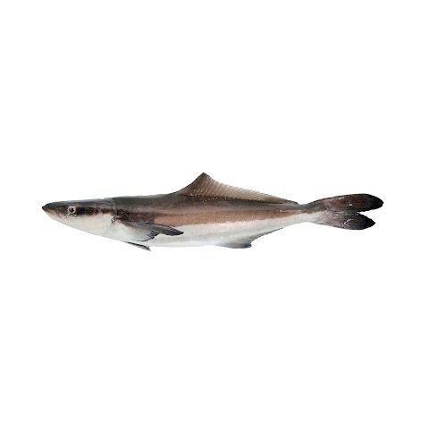 Fish & Chicken  Shopee Fish - Cobia Slice  (Kadal Viral), 500 g Fry Cut Cleaned