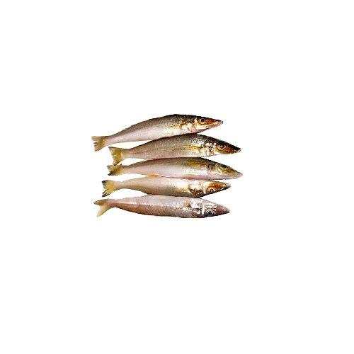 Fish & Chicken  Shopee Fish - Lady Fish - White  ( Killanga), 500 g Gravy Cut Cleaned