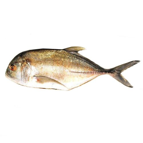 Fish & Chicken  Shopee Fish - Travelly  (Paarai), 1 kg Gravy Cut Cleaned