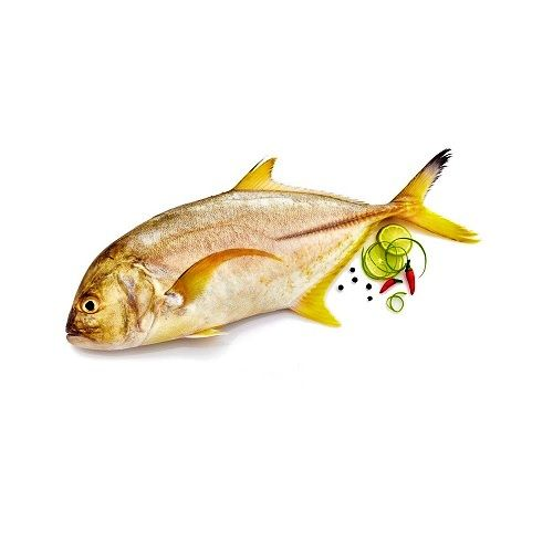 Fish & Chicken  Shopee Fish - Malabar Travelly  (Paarai), 1 kg Fry Cut Cleaned