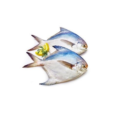 Fish & Chicken  Shopee Fish - White Pomfret (Vavval), 500 g Fry Cut Cleaned