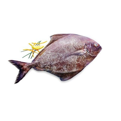 Fish & Chicken  Shopee Fish - Black Pomfret(Vavval), 1 kg Gravy Cut Cleaned