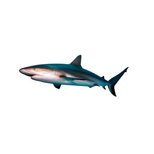 Fish & Chicken  Shopee Fish - Shark (Sura), 1 kg Shark Puttu Cleaned
