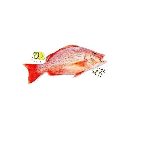 Fish & Chicken  Shopee Fish - Red Snapper  (Sankara ) - Big, 1 kg Fry Cut Cleaned