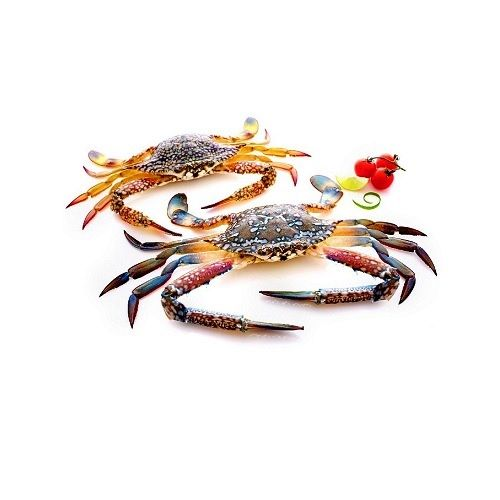Fish & Chicken  Shopee Crab - Blue Sea Crab  (Kadal Nandu), 4 pcs