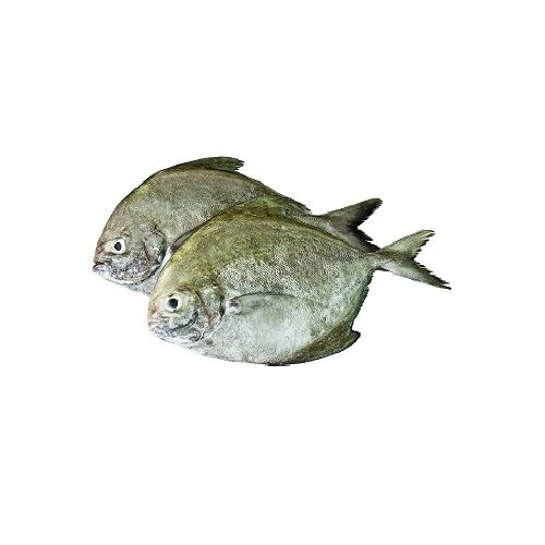 Test Fish O' Fish Fish - Black Pomfret - Karuppu Vavval, 1 kg Gravy cut Cleaned