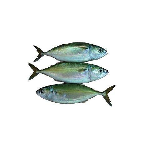 Test Fish O' Fish Fish - Indian Mackerel - Ayila, 1 kg Cube Cut Cleaned