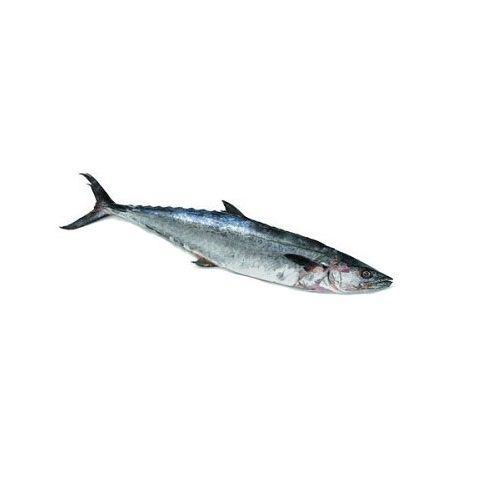 Test Fish O' Fish Fish - Big seer - Vanjiram, 1 kg