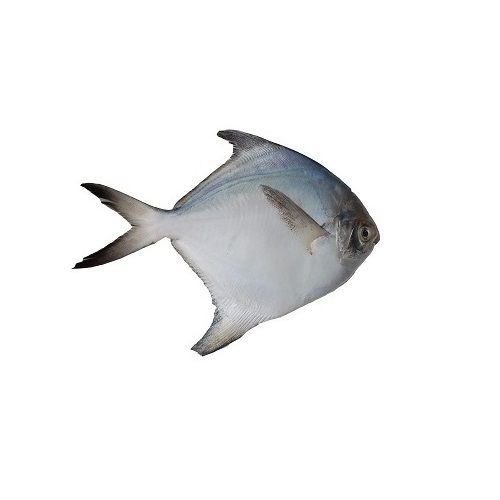 Test Fish O' Fish Fish - White Pomfret, 1 kg Fry cut Cleaned