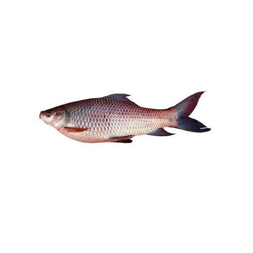 Test Fish O' Fish Fish - Rohu Fish, 1 kg Gravy cut Cleaned