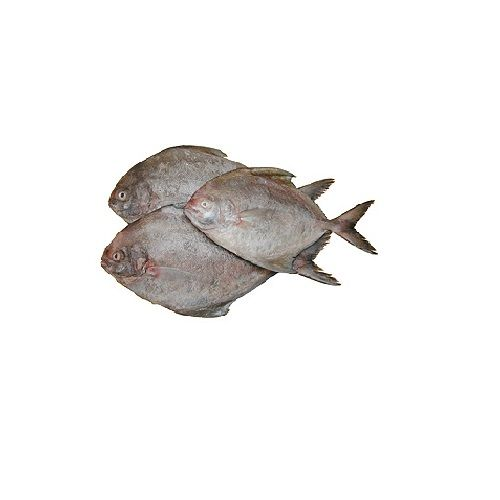Jk Fish Fish - Black Pomfret - Karuppu Vavval - 1kg, 1 kg Thin Slice Cleaned