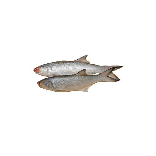 Jk Fish Fish - Salmon - Kala Fish - Without Wastahe - 1kg, 1 kg Thick Slice Cleaned
