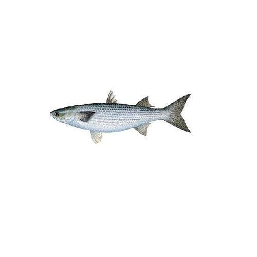 Jk Fish Fish - Mullet - 1kg, 1 kg
