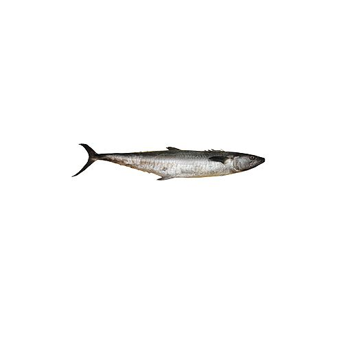 Jk Fish Fish - Big seer - Vanjiram - Without Wastage - 500g, 500 g Cube Cut Cleaned