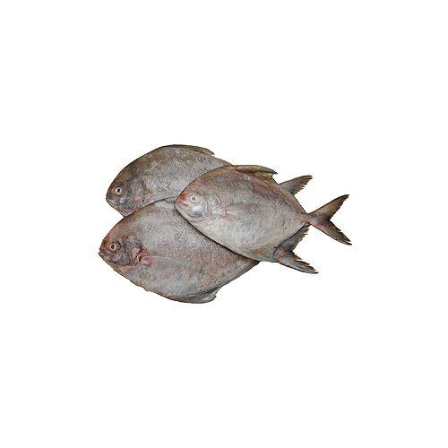 Jk Fish Fish - Black Pomfret - Karuppu Vavval - 500g, 500 g Curry Cut Cleaned