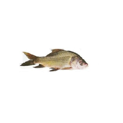 Jk Fish Fish - Catla - Katla - 500g, 500 g Bengali Cut Cleaned
