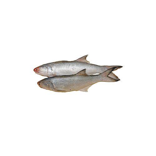 Jk Fish Fish - Salmon - Kala Fish - Without Wastahe - 500g, 500 g Cube Cut Cleaned
