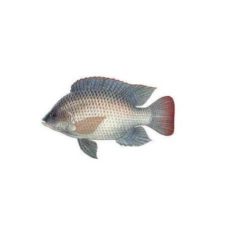 Jk Fish Fish - Tilapia - Jilape - 500g, 500 g Fry Cut Cleaned