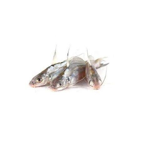 Jk Fish Fish - Tengra - 500g, 500 g
