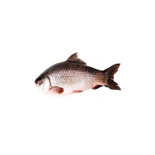 New Fish n Fresh Fish - Rohu, 1 kg Curry Cut Fresh Fish
