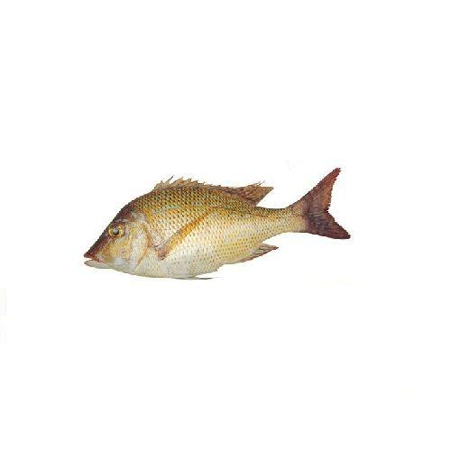 New Fish n Fresh Fish - Emperor Fish / Vilai Meen, Big, 500 g Fry cut Fresh Fish Full