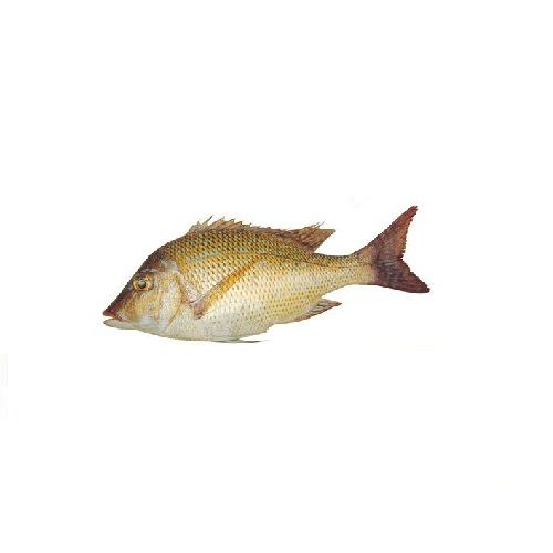New Fish n Fresh Fish - Emperor Fish / Vilai Meen, Big, 500 g Cube Cut Fresh Fish Full