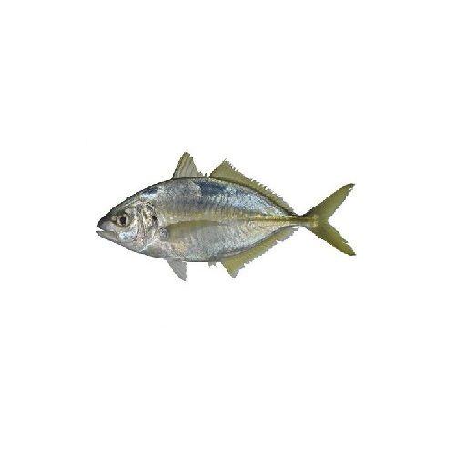 New Fish n Fresh Fish - Trevally / Paarai, Medium 2-3 pcs per KG, 1 kg