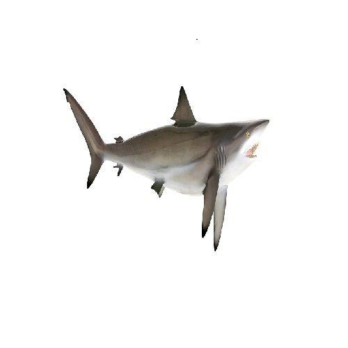 New Fish n Fresh Fish - Shark, 500 g With Skin Fresh Fish