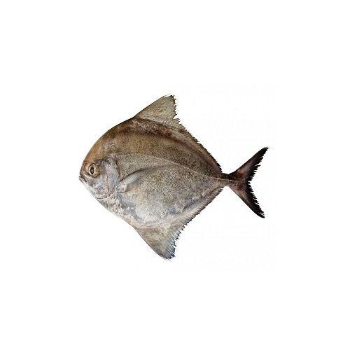 SAK Proteins Fish - Black Pomfret, Big, 1 kg