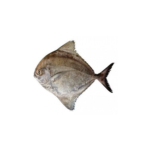 SAK Proteins Fish - Black Pomfret, Big, 1 kg Curry cut